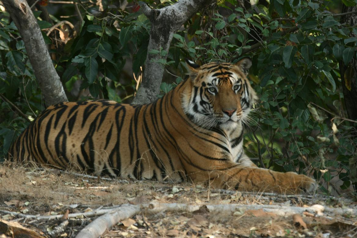 Indian Wildlife Tour - Tiger Expedition